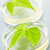 gm plants in petri dishes stock photo © elenaphoto