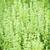 impianti · primo · piano · fresche · verde · piccolo · foglie - foto d'archivio © elenaphoto