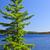 pino · lago · shore · albero · caduta · foresta - foto d'archivio © elenaphoto