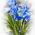 fioletowy · śniegu · wiosna · wiosną · liści · ogród - zdjęcia stock © elenaphoto
