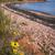 isola · del · principe · edoardo · fiori · di · campo · rosso · rocce · costa - foto d'archivio © elenaphoto