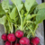köteg · friss · retek · szeletel · saláta · éles - stock fotó © elenaphoto