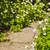 jardim · pedra · entrada · da · garagem · naturalismo · paisagismo · casa - foto stock © elenaphoto