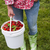 woman holding pail of fresh strawberries stock photo © elenaphoto