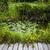 klein · landscaping · vijver · aquatisch · planten · water - stockfoto © elenaphoto