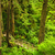 estate · abete · rosso · foresta · percorso · natura · stagione - foto d'archivio © elenaphoto