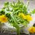 pissenlit · fleurs · bois · espace · de · copie · printemps · bois - photo stock © elenaphoto