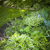 com · sombra · perene · jardim · luxuriante · verde · verão - foto stock © elenaphoto