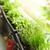varanda · jardim · naturalismo · plantas · verde · urbano - foto stock © elenaphoto