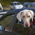 köpek · bakıyor · dışarı · araba · pencere · güzel - stok fotoğraf © elenaphoto