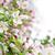 voorjaar · appelboomgaard · rij · appel · bomen - stockfoto © elenaphoto