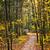落葉性の · 森林 · ツリー · 木 · 雨 · 光 - ストックフォト © elenaphoto