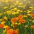 kwiaty · używany · alternatywa · górę - zdjęcia stock © elenaphoto
