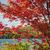 red maple on lake shore stock photo © elenaphoto