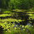 Lily pads on lake stock photo © elenaphoto