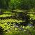 giglio · lago · acqua · gigli · superficie · settentrionale - foto d'archivio © elenaphoto