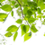 yeşil · bahar · yaprakları · beyaz · yalıtılmış · doku - stok fotoğraf © elenaphoto