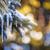 冬 · スプルース · カバー · 氷 · 長い - ストックフォト © elenaphoto