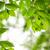yeşil · bahar · yaprakları · karaağaç · bo · doğa - stok fotoğraf © elenaphoto
