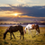 horses grazing at sunset stock photo © elenaphoto