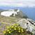 alpino · pradera · parque · flores · montana - foto stock © elenaphoto