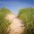 path over sand dunes with grass stock photo © elenaphoto