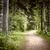 path in dark moody forest stock photo © elenaphoto
