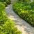 stone path in landscaped home garden stock photo © elenaphoto