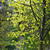 groene · boom · ontspannen · natuur · kleuren - stockfoto © elenaphoto