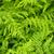 красивой · пышный · папоротник · зеленый · капли · воды - Сток-фото © elenaphoto