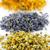 aszalt · virágok · narancs · virág · természet · egészség - stock fotó © elenaphoto