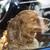dog locked in car stock photo © elenaphoto