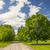 campi · alberi · cielo · blu · nubi · primavera - foto d'archivio © elenaphoto