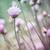 çiçeklenme · zaman · yaratıcı · pişirme · otlar - stok fotoğraf © elenaphoto