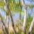 birch trees on lake shore stock photo © elenaphoto