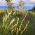 escénico · sol · paisaje · efecto · valle - foto stock © elenaphoto