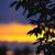 fa · sziluett · drámai · naplemente · Afrika · Kenya - stock fotó © elenaphoto
