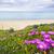 roxo · flores · silvestres · praia · flor · árvore · nuvens - foto stock © elenaphoto