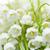 floraison · Lily · vallée · herbe · feuille · fond - photo stock © elenaphoto