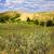 sabbia · panorama · spirito · abete · rosso · boschi · parco - foto d'archivio © elenaphoto
