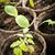 苗 · 成長 · 苔 · 春 · 自然 - ストックフォト © elenaphoto