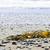 plaj · detay · okyanus · sahil · Kanada · deniz · yosunu - stok fotoğraf © elenaphoto