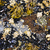 mussels and barnacles at low tide stock photo © elenaphoto
