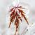 icy winter leaf stock photo © elenaphoto