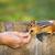 gıda · makro · fareler · yeme · sıçan - stok fotoğraf © elenaphoto