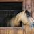 警告 · ブラウン · 馬 · 肖像 · 好奇心の強い · 安定した - ストックフォト © elenaphoto
