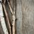 doku · beyaz · huş · ağacı · havlama · can · kâğıt - stok fotoğraf © elenaphoto