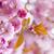 roze · voorjaar · boomgaard · kersenbloesem · bloemen - stockfoto © elenaphoto
