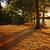 manzara · iki · uzun · iskele · şafak - stok fotoğraf © elenaphoto