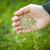 hand planting grass seeds stock photo © elenaphoto
